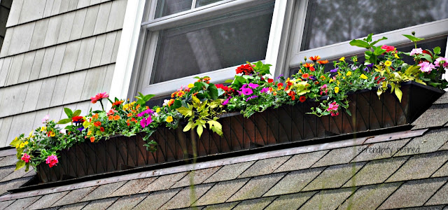 Brightly colored annual flowers spring and summer window box
