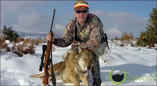 Berburu hewan liar