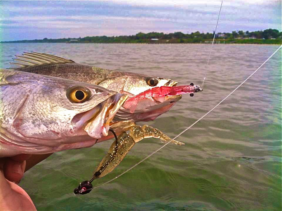 on foot angler: from whites tackle - ft pierce / stuart, Soft Baits