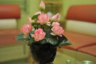 sen, hoa sen, hồng