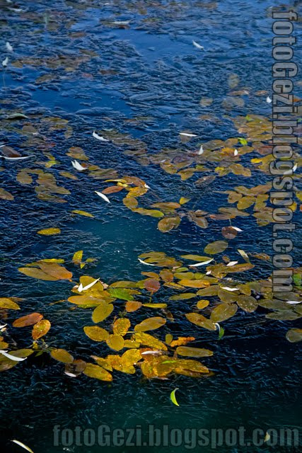Donmuş gölde sonbahar yaprakları