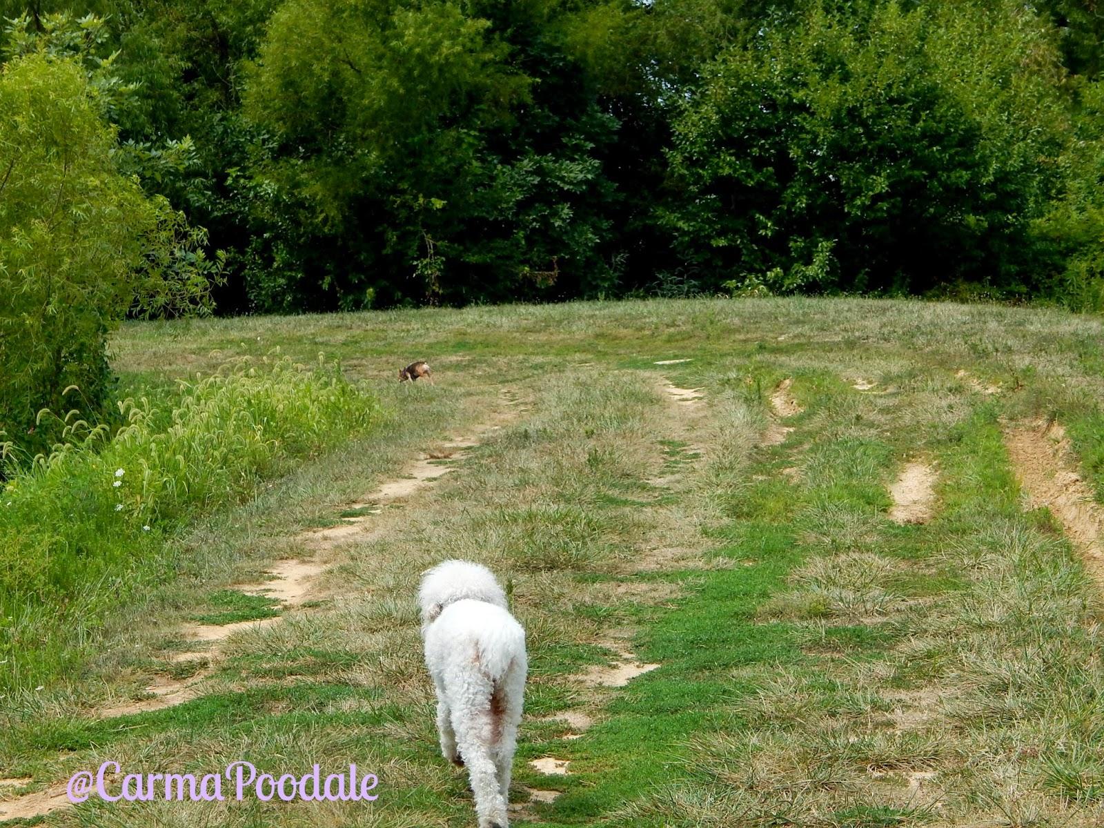 Carma walking down trail