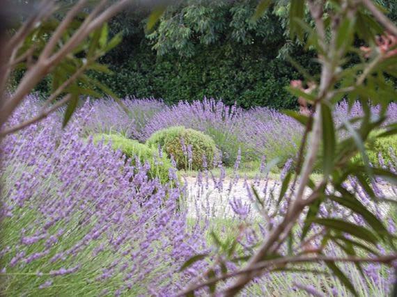 Garden sopelana mundo verde jardinarium planta de la semana for Plantas aromaticas para jardin