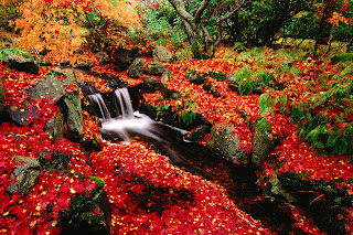 Red Leaves and River Stunning Landscape HD Wallpaper