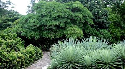 fasilitas di kebun raya purwodadi pasuruan
