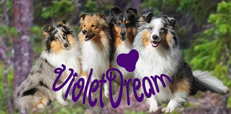 Violetdream kennel