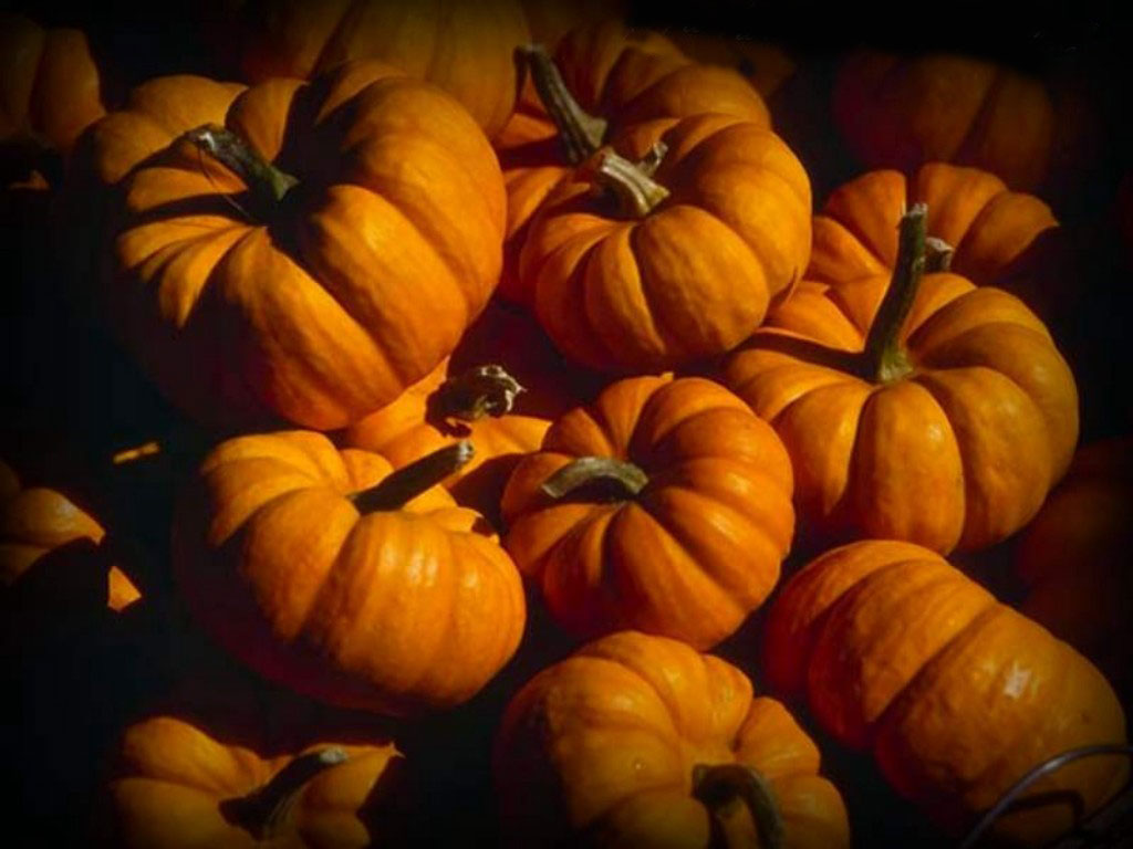 Fantastic Wallpaper High Quality Halloween - High-Quality-Halloween-Wallpapers  Gallery_229059.jpg