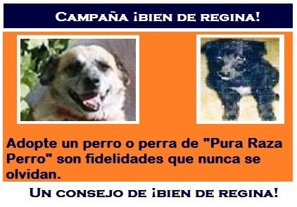 CAMPAÑA ¡BIEN DE REGINA!