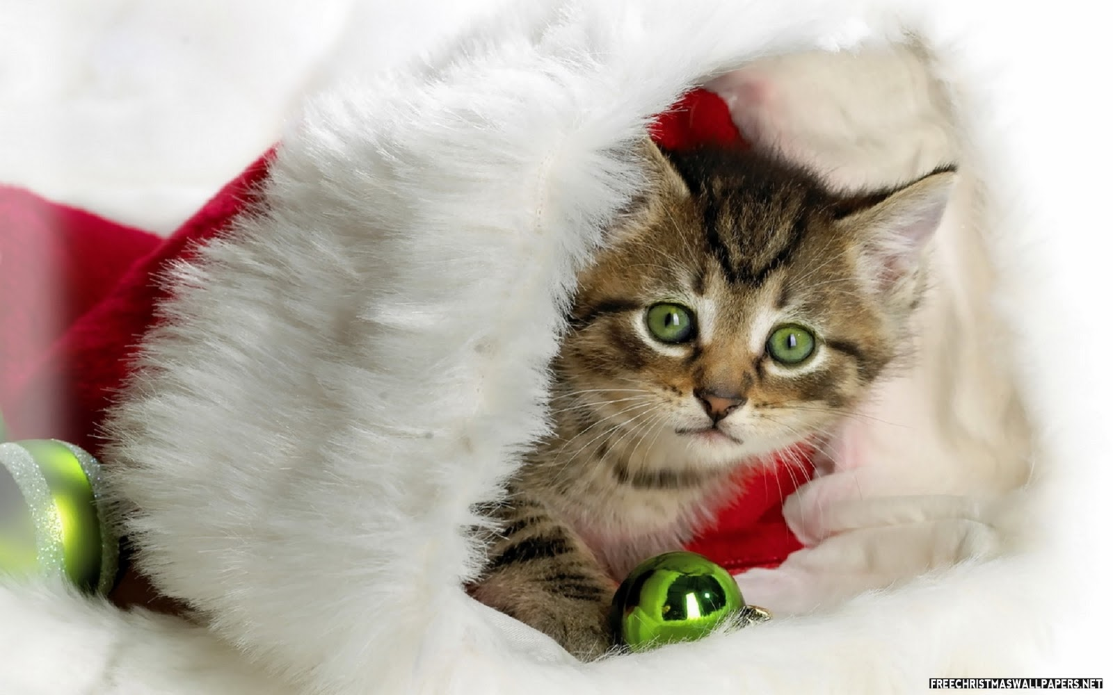 Funny wallpapers hd wallpapers cute christmas wallpapers for Pretty christmas pics