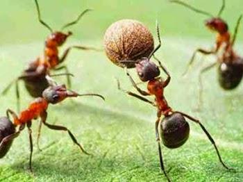 Πως αντιδρούν τα μυρμήγκια όταν βρεθούν κοντά σε αναψυκτικό; [photo]