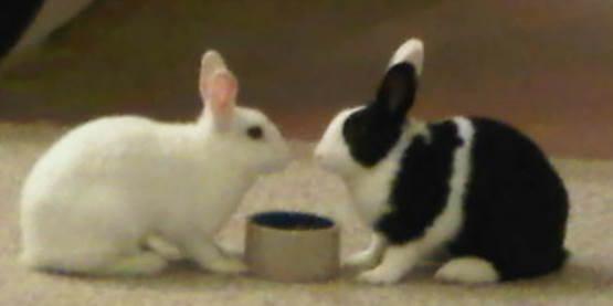 Bunny Pro U0026 Con