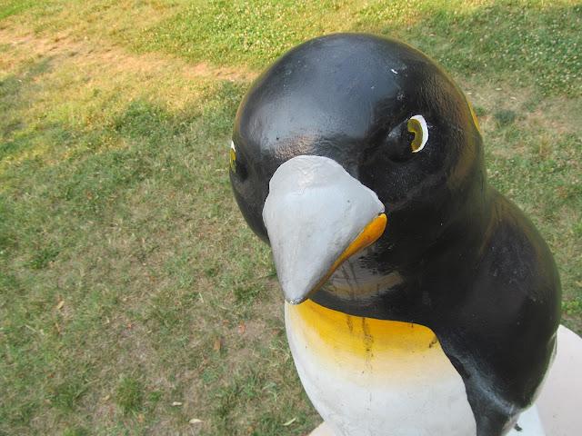 Silver Spring penguin