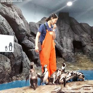 Coreana dando clase sobre pingüinos