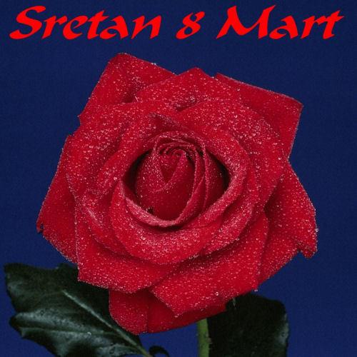 NHỮNG CÁNH ĐỒNG HOA Svim-zenama-poklanjam-ruzu-i-cestitam-Sretan-8-mart-download-besplatne-ljubavne-slike-dan-zena