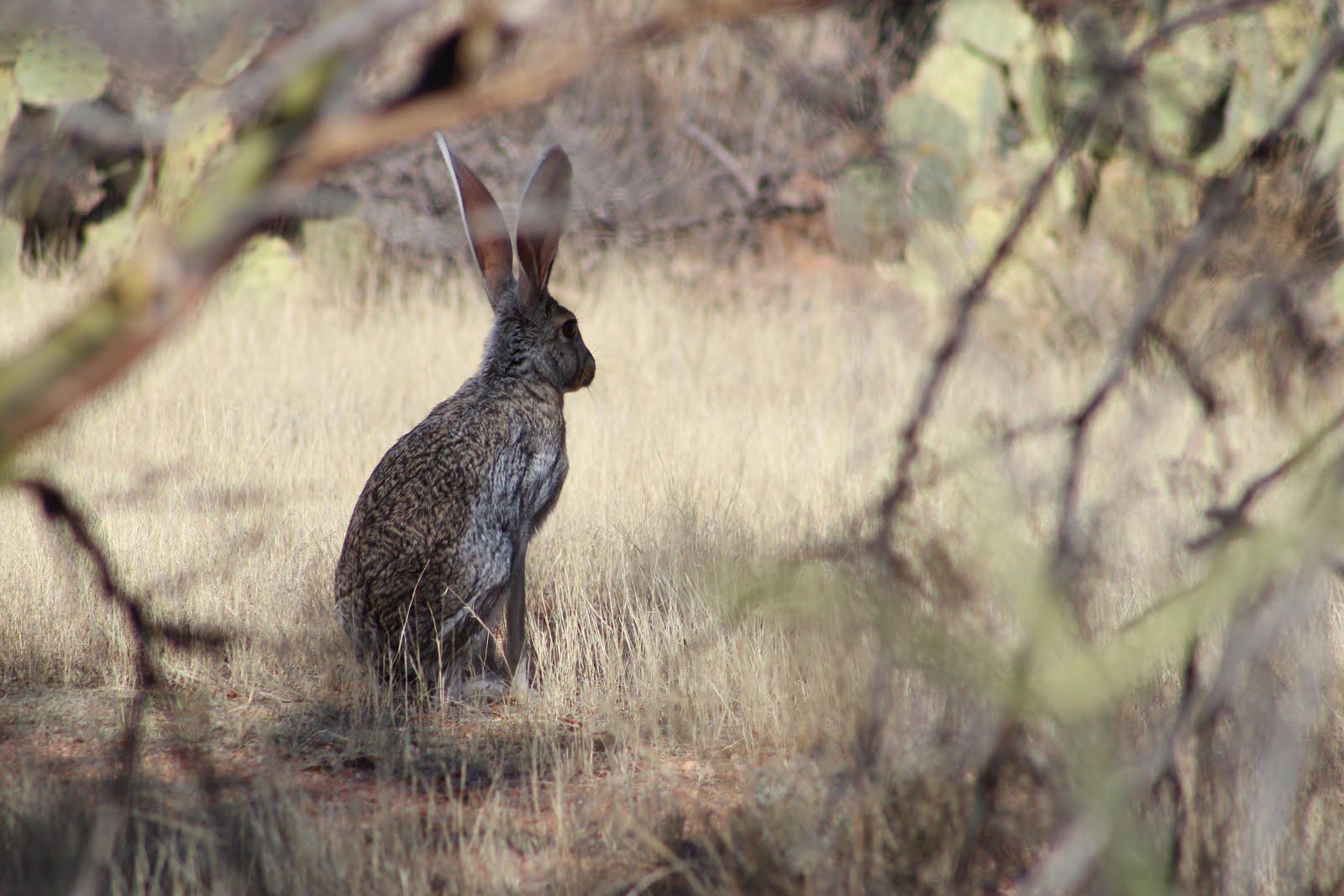 gjhikes   saguaro national park