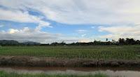 brunei Rampayoh paddi field