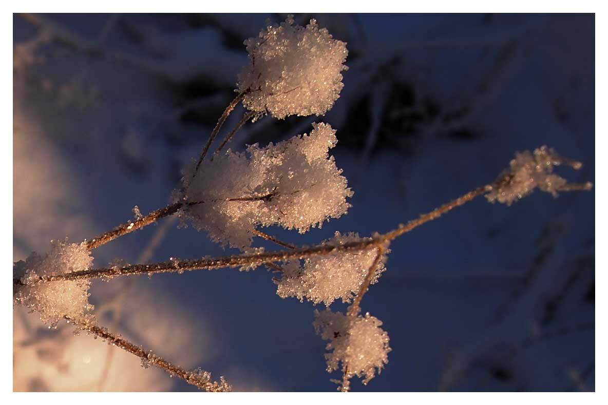 Winter branch3