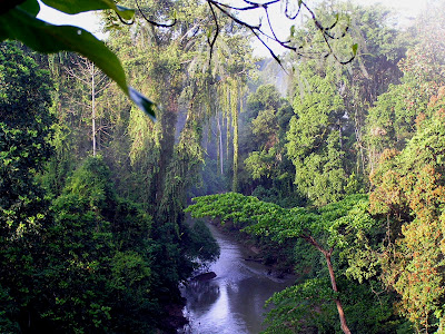 10 Negara Dengan Hutan Terluas di Dunia