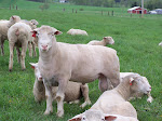 Breeding for Fall Lambs