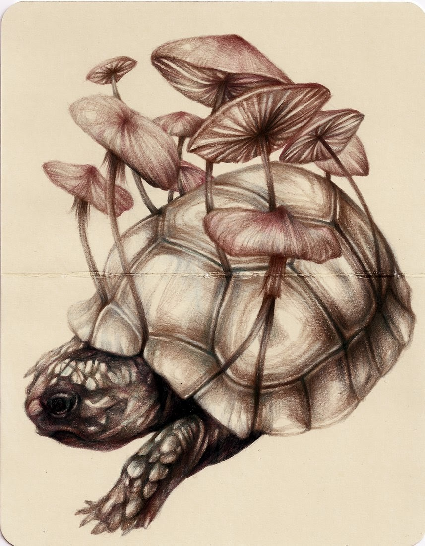 15-Marco-Mazzoni-Surreal-Animal-Drawings-www-designstack-co