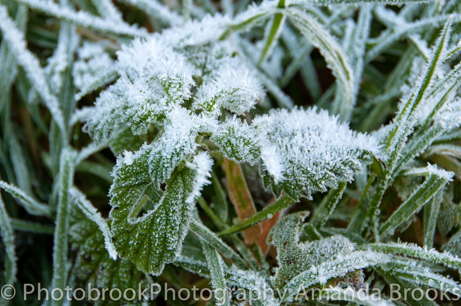 Heavy frost on leaves