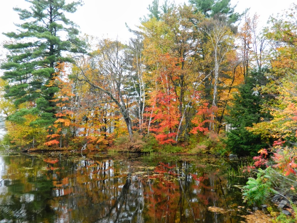 Lake Muskoka fall colours still water by garden muses--a Toronto gardening blog