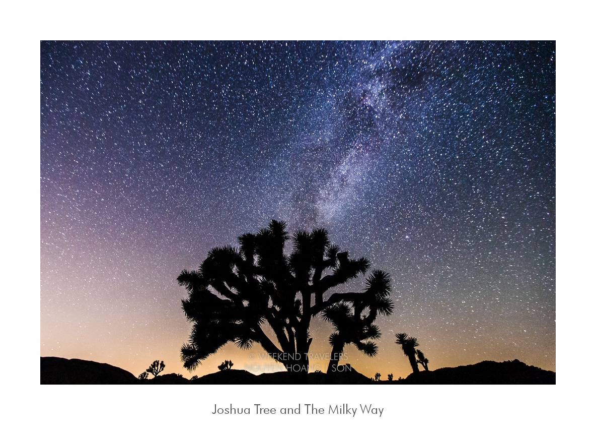 Joshua Tree and the Milky Way, starry night in the Mojave desert