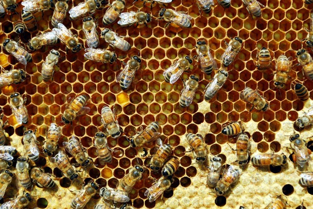Bisysslorna - Följ med inuti en bikupa