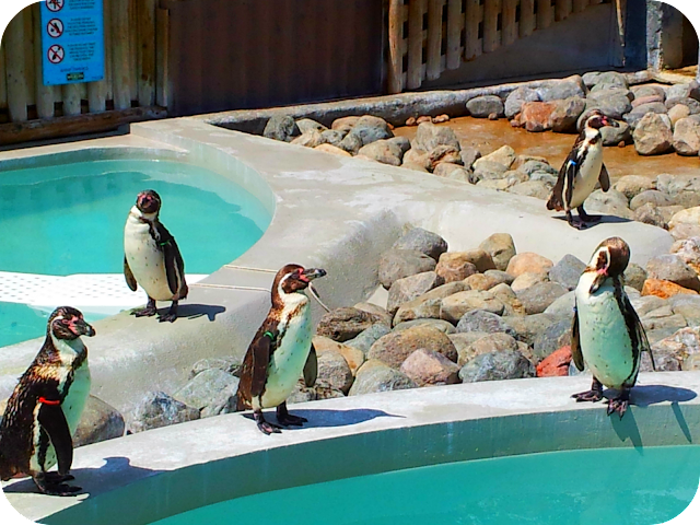 wingham wildlife park, penguins