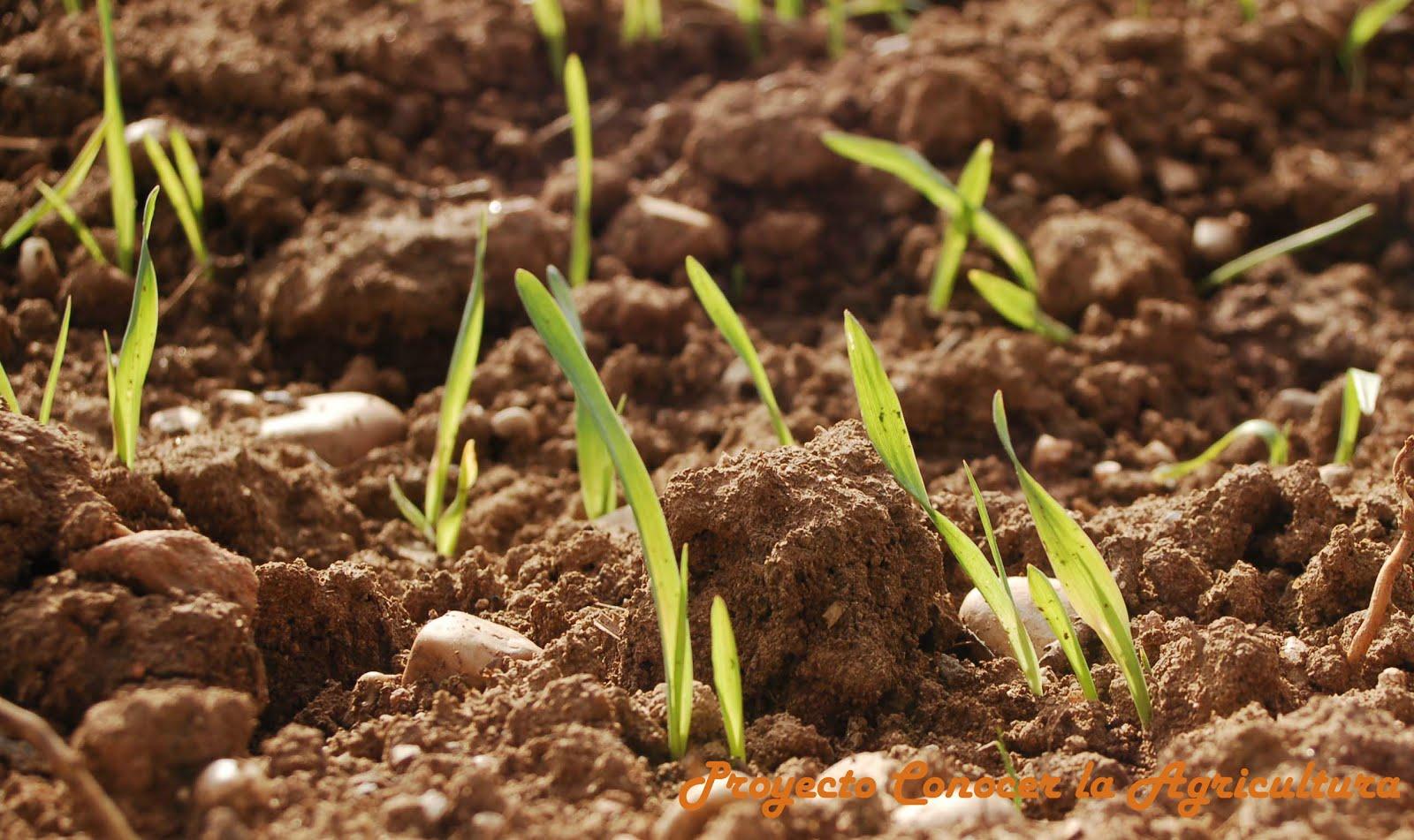 abeceagrario suelo conocer la agricultura y la ganader a