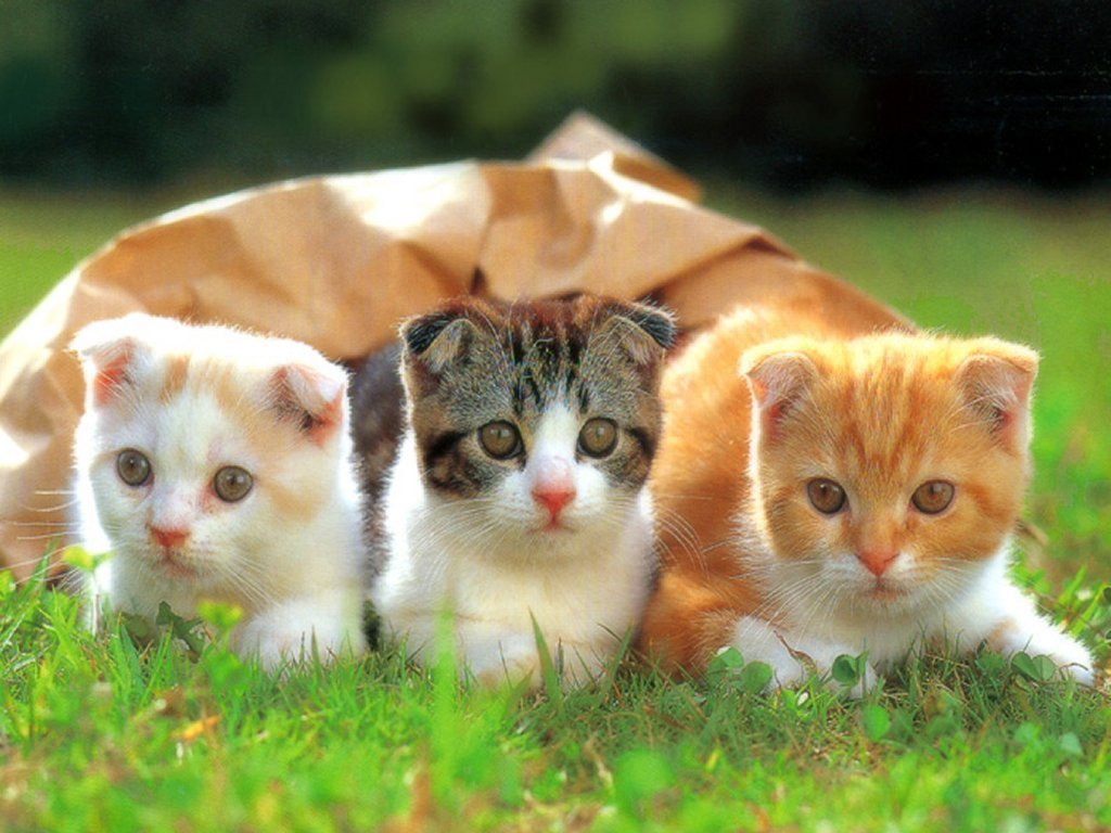 Funny kittens wallpapers funny animals The three cats