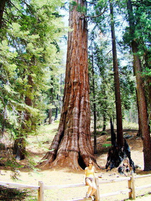 Sequoia Park - California - USA