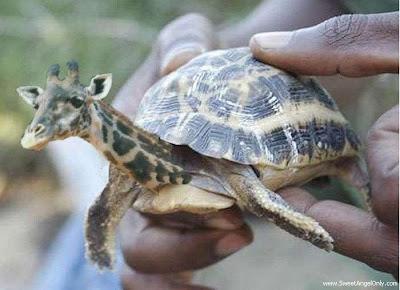 funny_picture_funny_tortoise_vandanasanju.blogspot.com