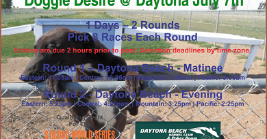 greyhound racing today