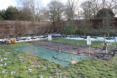 Beningbrough Hall allotment - part of the WWII project