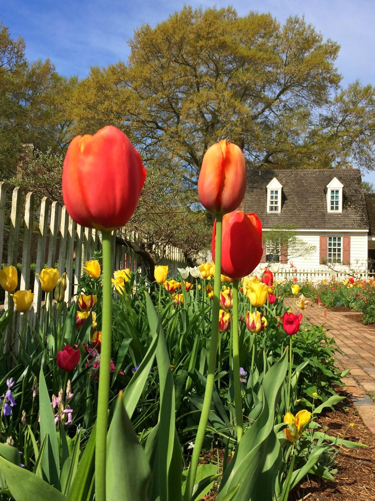 Colonial Williamsburg garden via foobella.blogspot.com