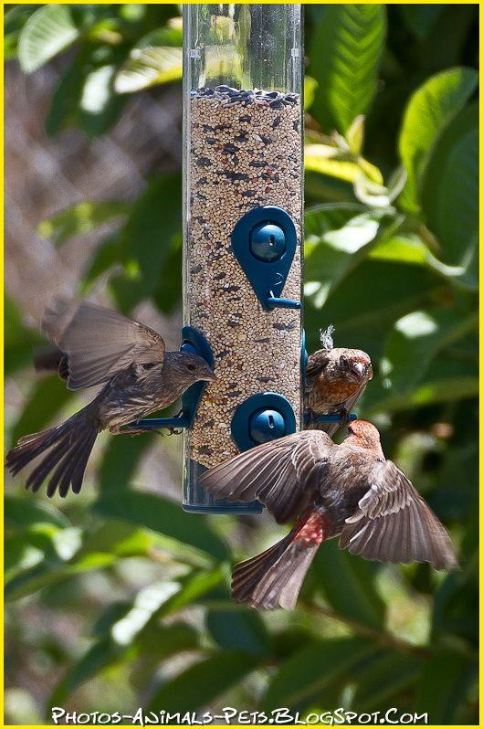 http://4.bp.blogspot.com/-jUnNAMpwVrg/Tt-UDBTWh_I/AAAAAAAACl0/82cbaKtcJBQ/s1600/pictures%2Bbird%2B.jpg