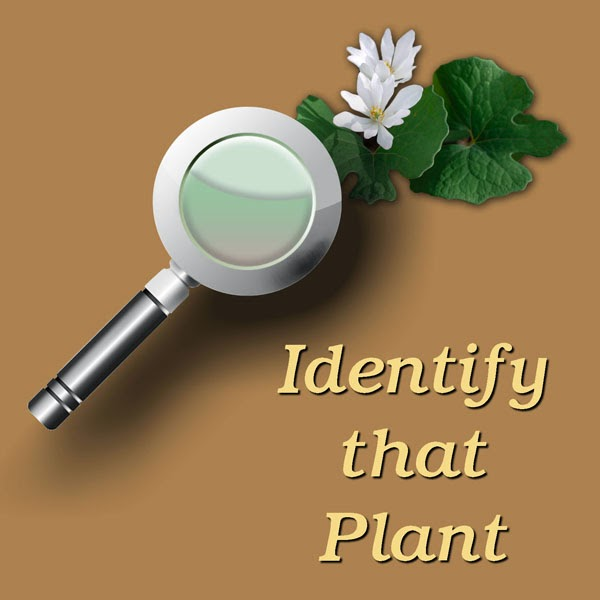 Plant Identification By Picture on Leaf Identifier
