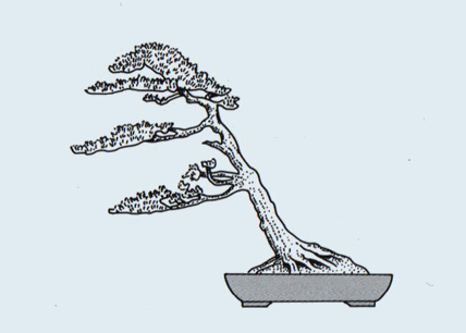 http://evoluzionebonsai.blogspot.it/2015/02/stili-bonsai-fukinagashi.html