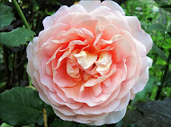 Abraham Darby