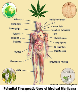 THE IMPORTANCE OF DRINKING RATHER THAN SMOKING CANNABIS