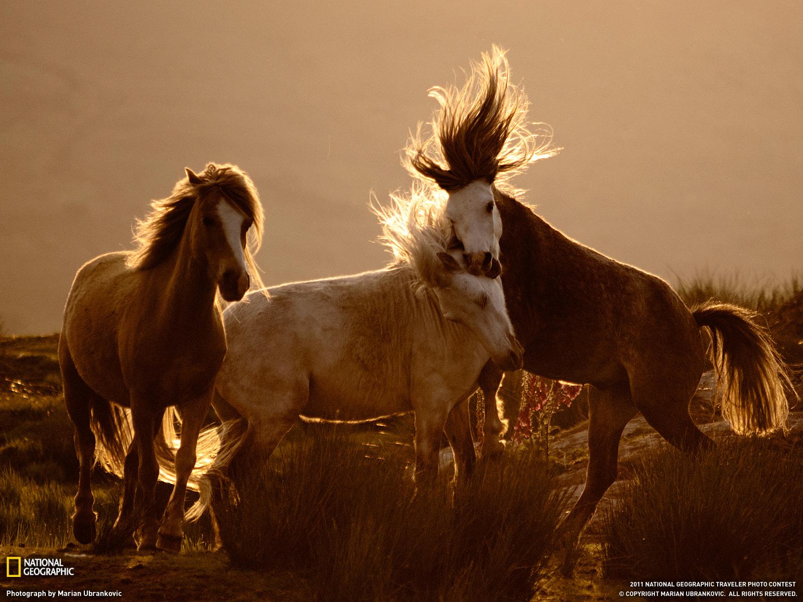 Animales Chistosos Imagenes Chistosas - descargar imagenes de animales