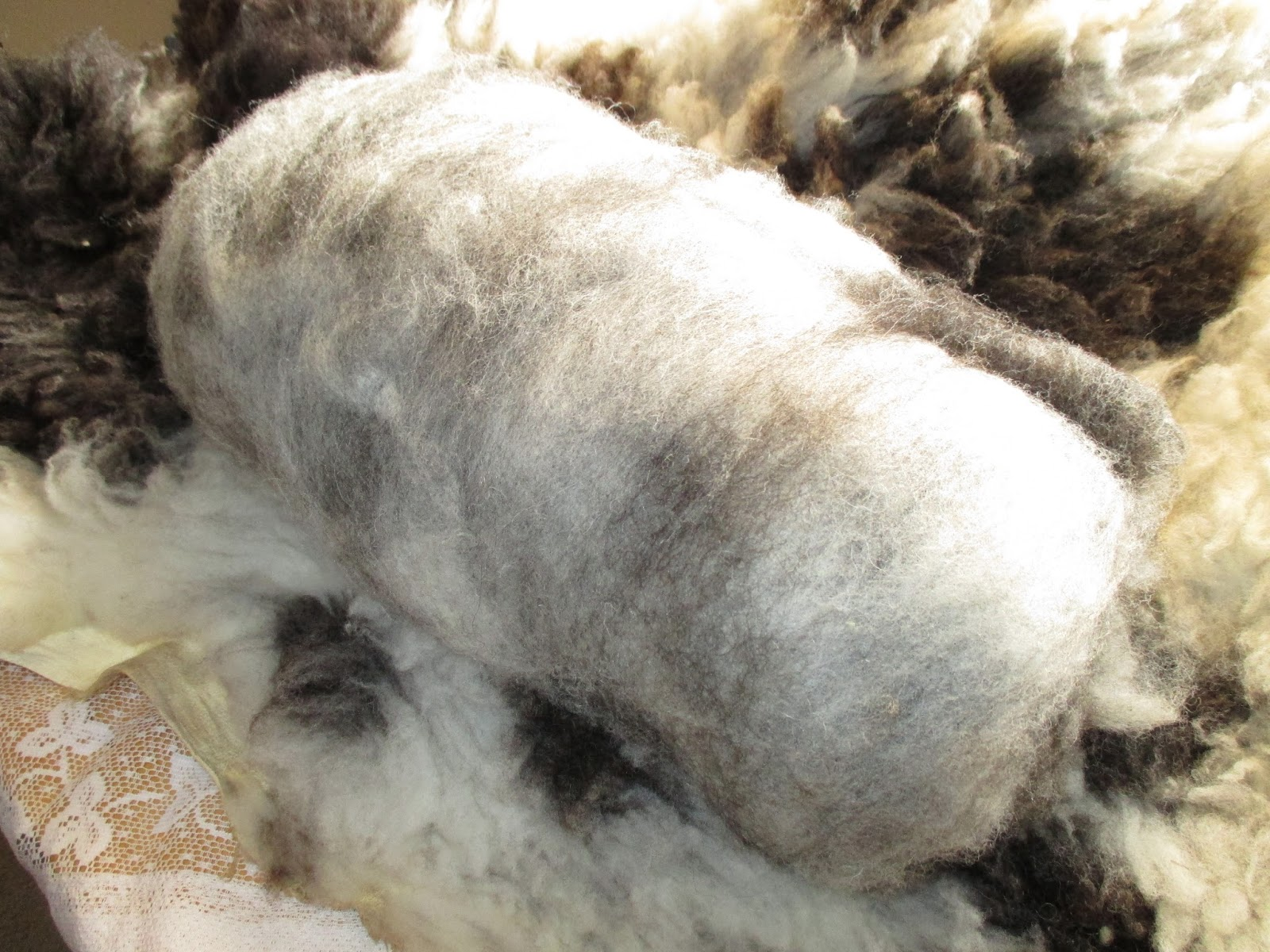 i Have Clean Carded Wool