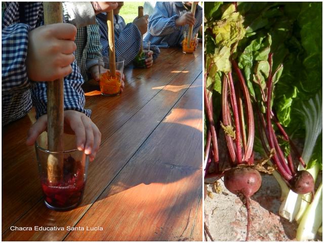 Extrayendo pigmentos de las remolachas - Chacra Educativa Santa Lucía