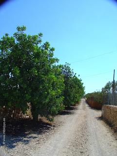 Ciclocarril Porto Cristo - Cala Morlanda
