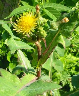 Biogin Obat Herbal Untuk Membantu Meluruhkan Batu Urin