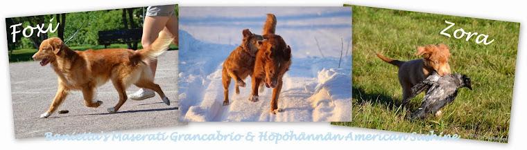 Foxi ja Zora