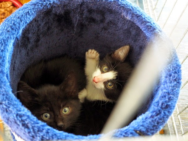 kittens pictures