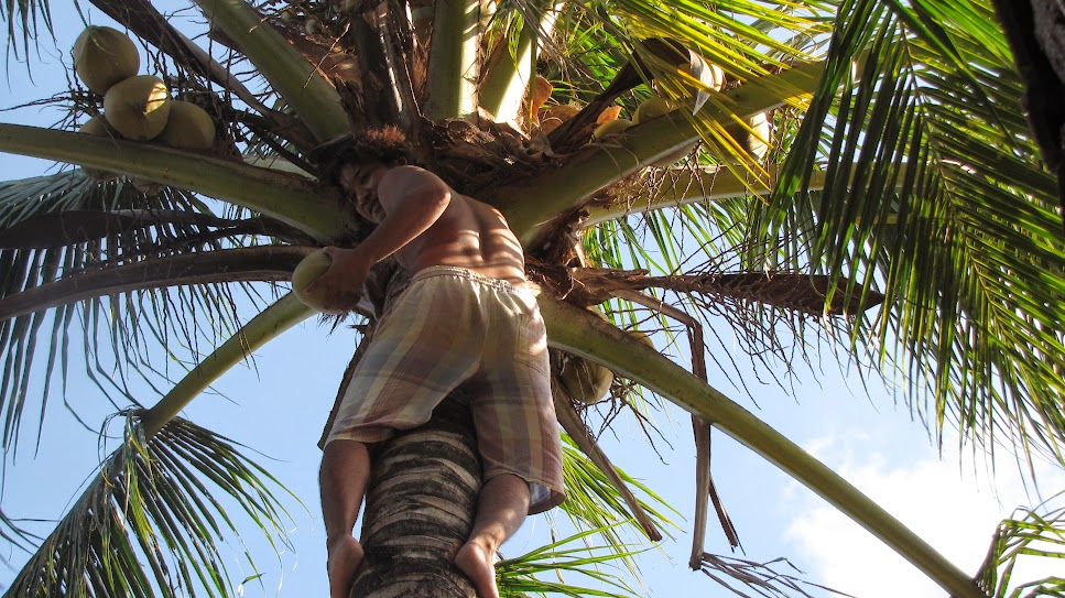Farmers' yard bali indonesia helpx