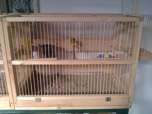 costruire gabbia per uccelli tutta in legno curiosit web
